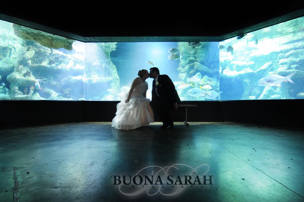 tulsa photographers at the tulsa aquarium